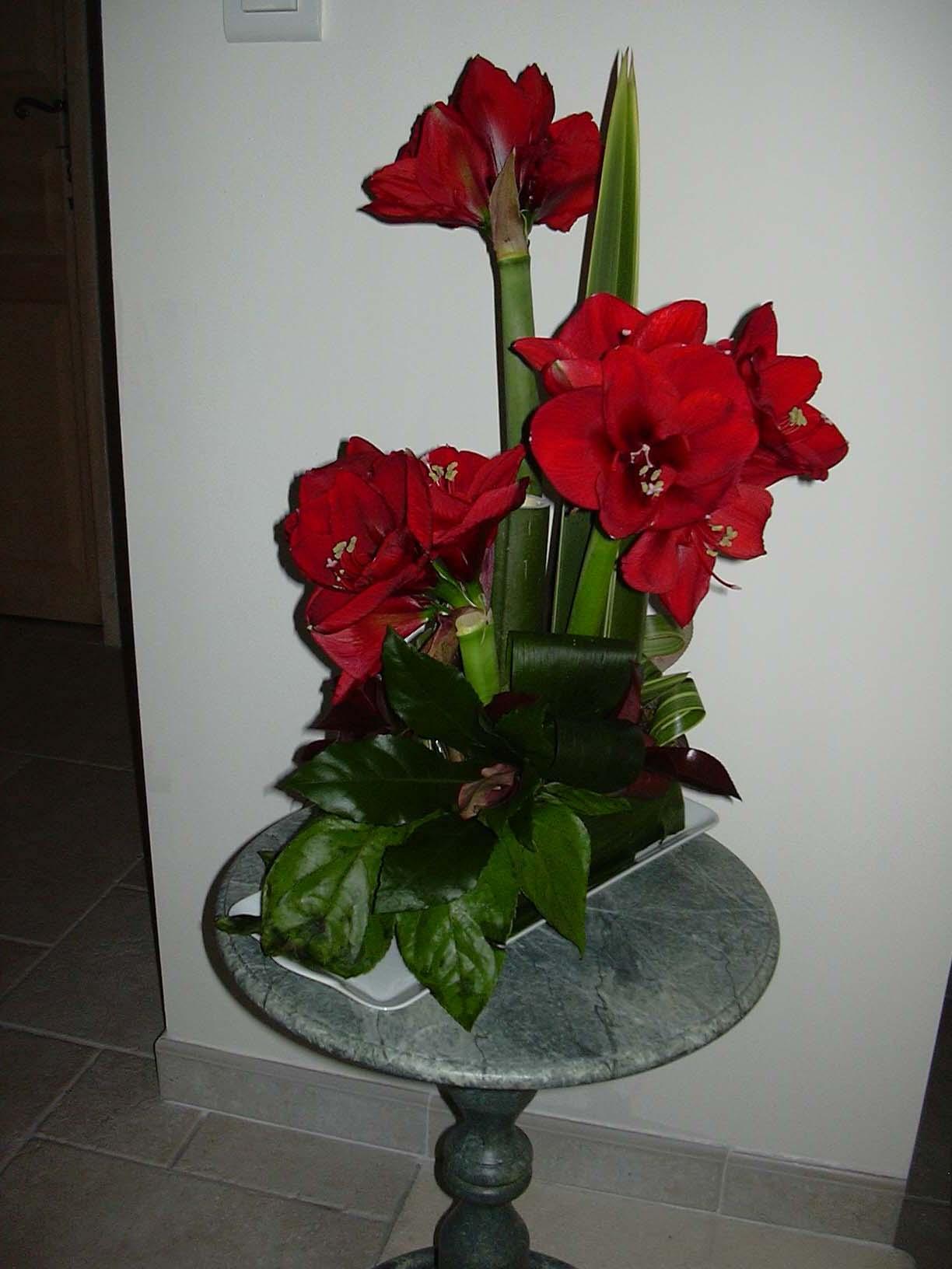 Le blog de la section art floral du ce de la sepr for Amaryllis de noel